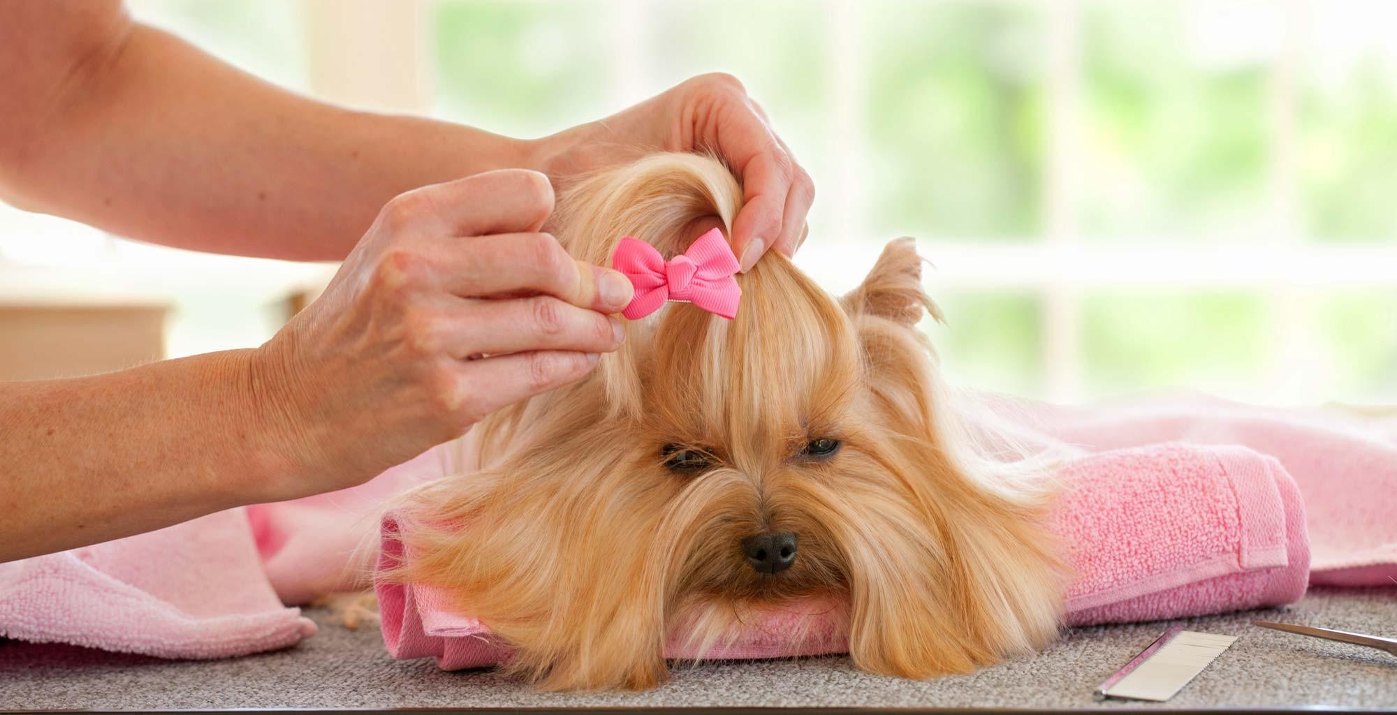 Island Dog Spa Grooming