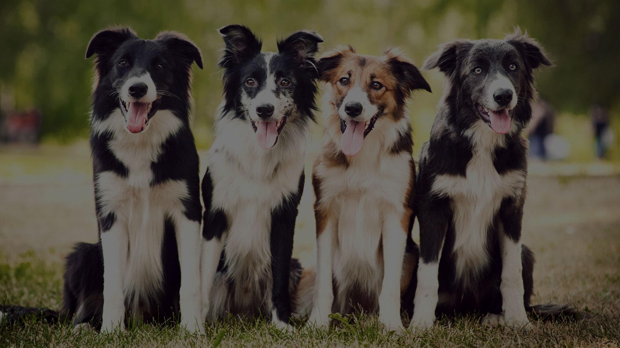 Island Dog Spa Team Approach